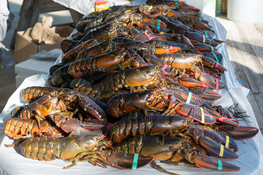 Southern Sailing Club annual lobster bake